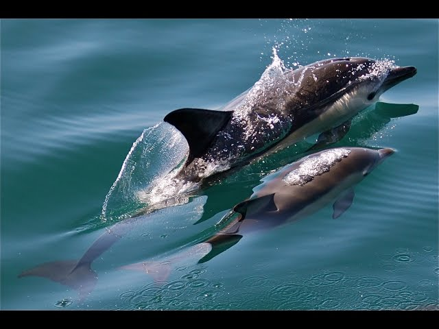 Dolphins Safari in Trincomalee