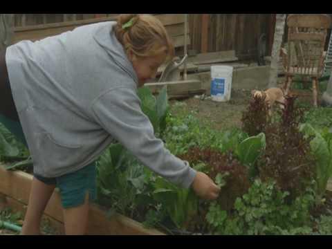 6 Hours Of Sunlight - Short Documentary On Urban Gardening