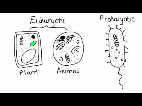 Compare Prokaryotic and Eukaryotic Cells