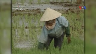 Nông thôn Việt Nam: nghèo đói vẫn cao, đất đai rơi vào tay nhà nước