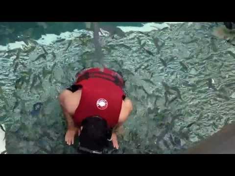 Snorkeling & Fish Feeding at Pulau Payar Marine Park, Langkawi - My Malaysia Holidays