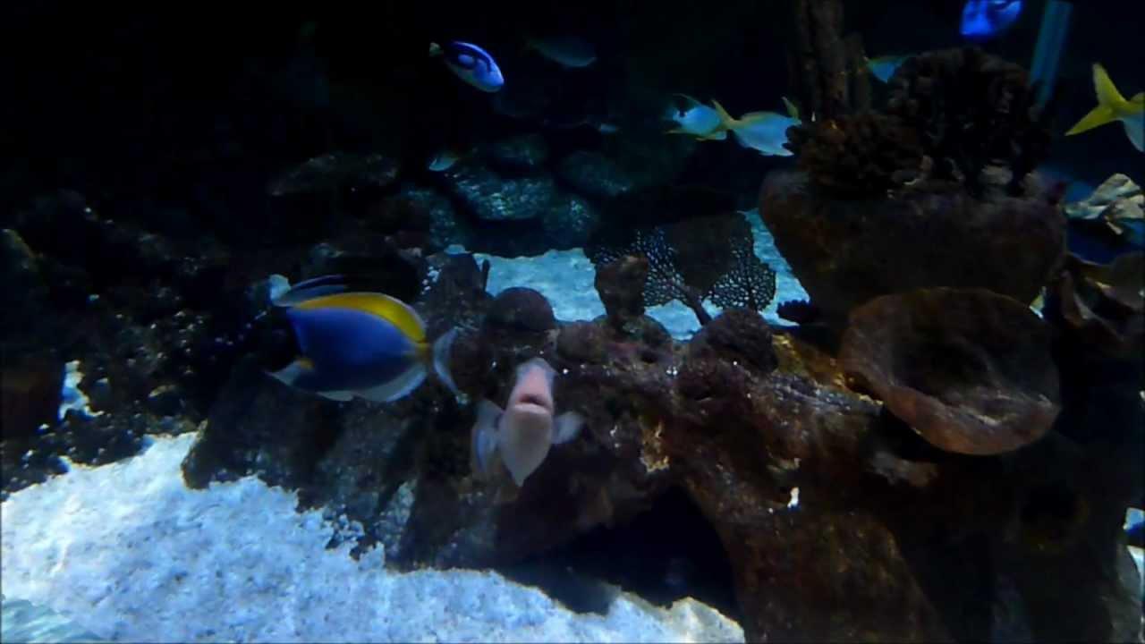 aquarium sealife val d europe