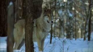 Слава Медяник - Мы волки