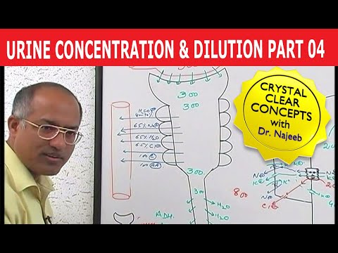 physiology concentration and dilution When we add a drug in an isolated 10 ml organ bath must the dilution be not  cardiovascular physiology  change the overall dilution or concentration of active.