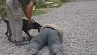man bites dog (gently).wmv