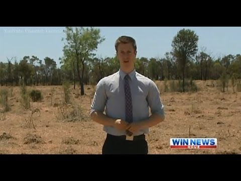 Cattle Graziers Battle Dry Conditions - WIN News Rockhampton (2013)