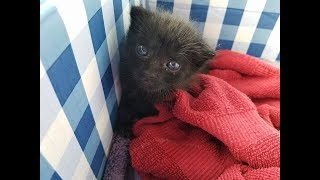 A Woman Found This Furball Crying In Her Backyard – But He Grew Into A Mighty Panther Cat