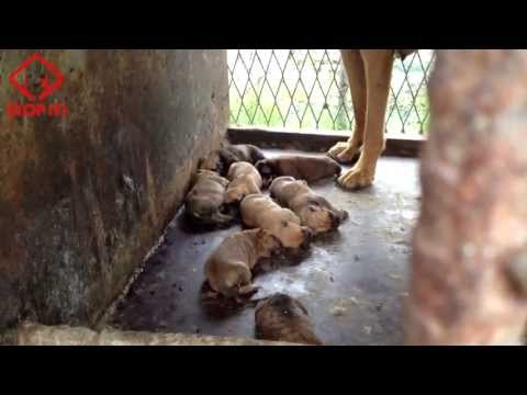Documentary Dog Meat (Boshintang) by STOP IT!