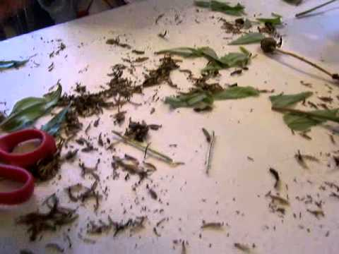How to collect zinnia seeds save money gardening youtube Collect and save