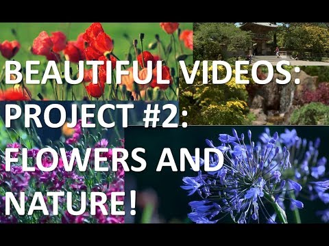 Flowers and nature - A project from Beautiful Videos - Official Video (1080p HD)