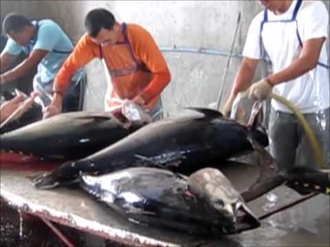 Tuna Processing Video