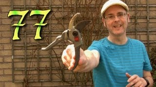 Learning English, Lesson 77, Pruning, Speak English with Mr Duncan