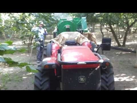 raccolta nocciole 2013 - con carraro tgf 9400