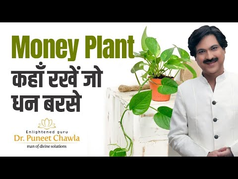 How to Plant and Grow Money Plant? Vastu Tips for Money Plant to Earn More Money