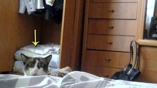 Cat Peeking Over Bed Funny Russian Dramatic Stalking Cat