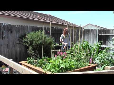 HomeMade Organic Pesticide Test