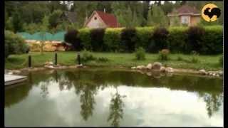 Пруды и мосты в саду. Ландшафтный дизайн