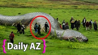5 Loài rắn lớn nhất thế giới – Bạn không tin chúng tồn tại.