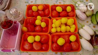Сентябрь – пора сбора урожая