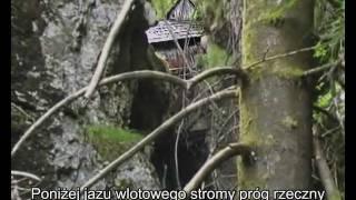 V. Schauberger - Zrozumieć i naśladować naturę 1/5 [PL]