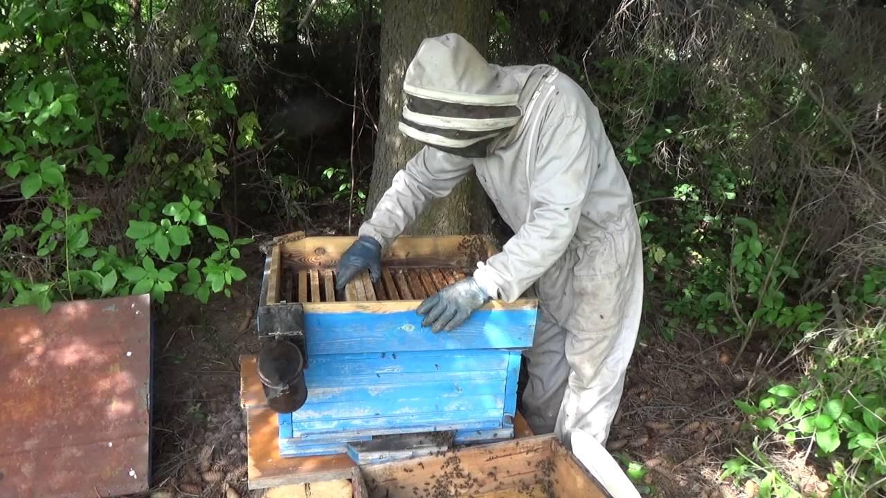 Как поймать пчел своим руками