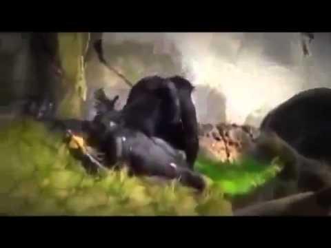 Silverback Richard Mating With Shinda