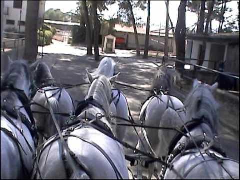 Daniel Isidoro ( entrenamiento sexta de caballos p.r.e enganchados a un maraton de paseo)