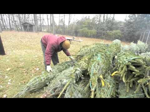 Tree Giveaway at Sugaw Creek Presbyterian