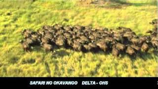 Safari No Okavango Delta