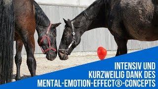 Coaching mit Pferden - Impressionen einer Ausbildung zum pferdegestützten Coach