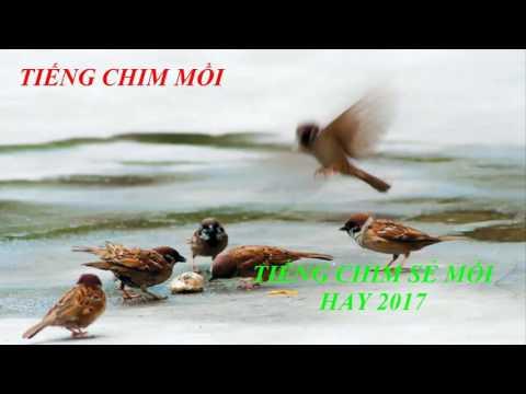Tiếng chim mồi - Tiếng chim sẻ mồi cực hay 2017 \