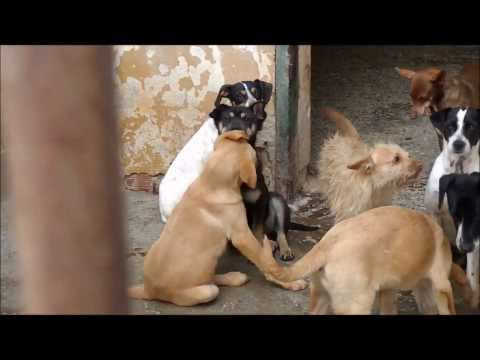 Animalinneed: Kennel camp 4 with the puppies