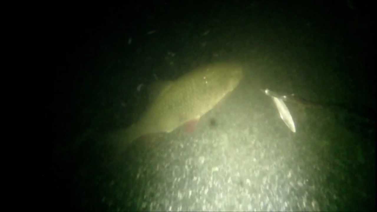как ловить ночью рыбу с фонарем