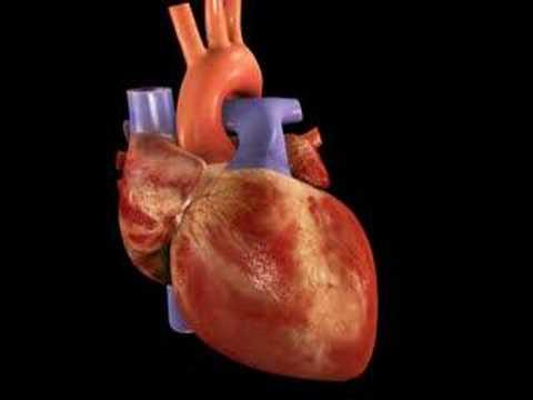Gif animado corazon humano - Imagui