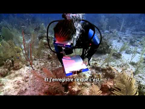 Global Reef Expedition: Mission Bahamas (French Subtitled)