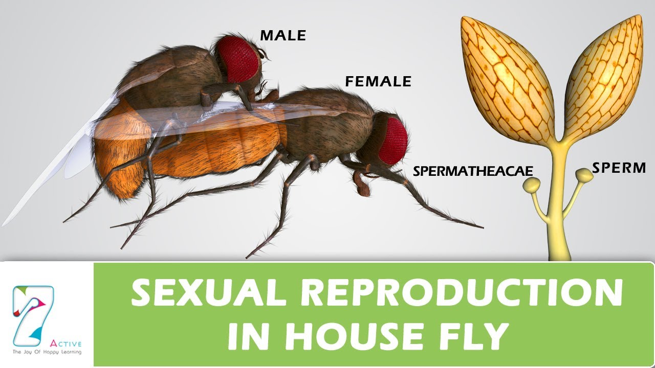 what is the wasp sexual reproduction picture