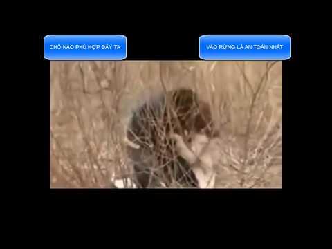 Bắt cóc cô gái vào rừng đánh đập rồi giở trò sàm sỡ