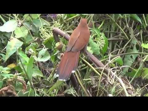 Pássaros do córrego do barreiro,Mato Grosso do sul,