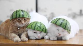 Cats With Watermelon Hats