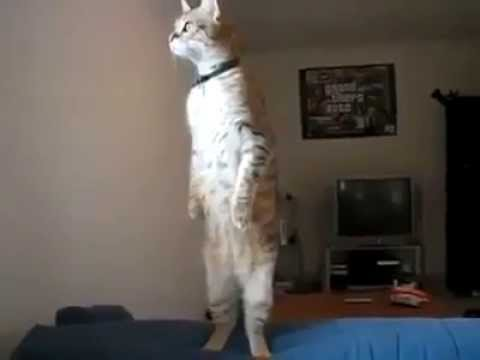 Never seen a cat do that for so long!