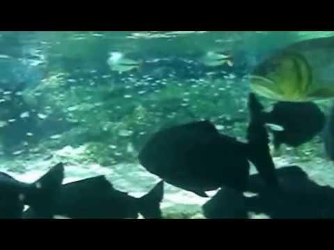 Pescadores de imagens, Rio da prata, Peixes de água doce,
