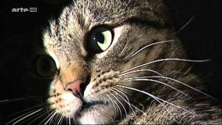 Xenius - Katzen Vergoettert und verteufelt