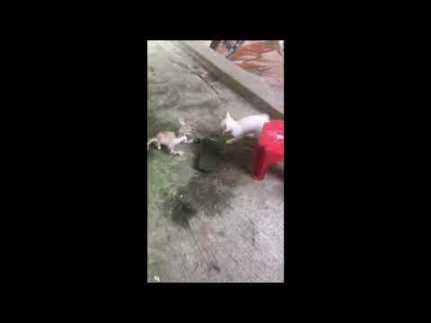 Kitten wars  -  Round 1 - Snow funny