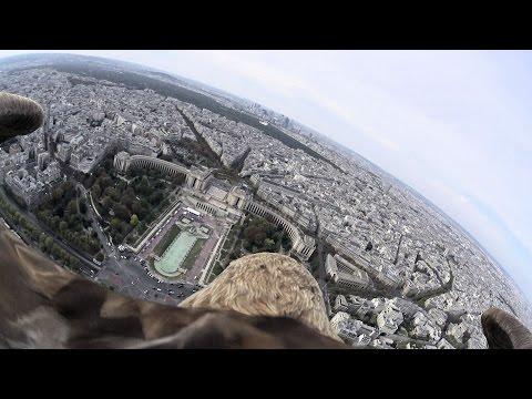 تصوير لمدينة باريس من كاميرا مثبتة على ظهر صقر