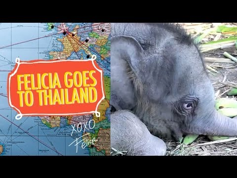 Thailand Trip and Baby Elephant Butts by Felicia Day