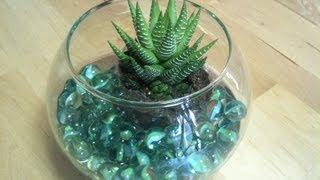 Centro de mesa con cactus y pecera | facilisimo