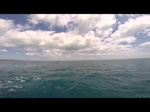 Fraser island marlin