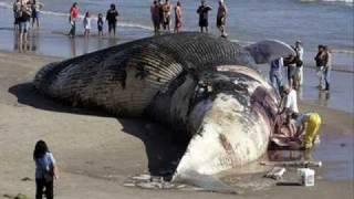 World's Biggest Animal