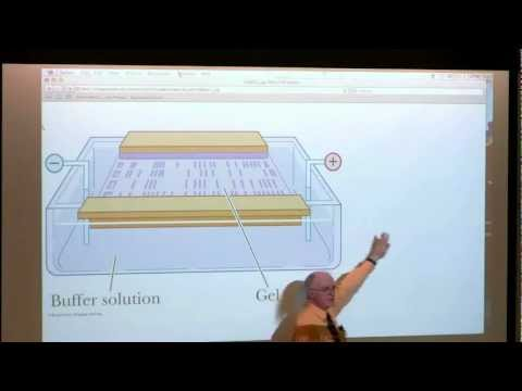 #8 BB 350 Protein Purification II / Enzymes I - Kevin Ahern's Biochemistry Online