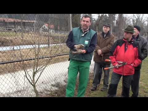 Prikaz rezi sadnega drevja Brdo pri Lukavici 2 3 2015